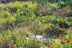 夏天温暖的大雨 免版税库存图片