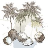 夏天热带棕榈和椰子背景 向量例证