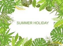 夏天热带绿色背景 库存照片