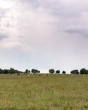 夏天牧场地背景-垂直 免版税库存照片