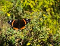 夏天的挪威蝴蝶和结尾 免版税库存照片