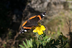 夏天的挪威蝴蝶和结尾 免版税库存图片