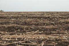 夏天的结尾,干玉米的图象在收获以后 免版税库存图片