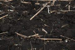 夏天的结尾,干玉米的图象在收获以后 图库摄影