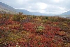 五颜六色的寒带草原。 库存照片