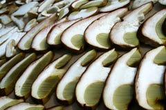 夏天等概率圆蘑菇牛肝菌蕈类详细被切的reticulatus帽子 图库摄影
