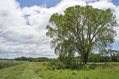 夏天结构树和域 免版税库存照片