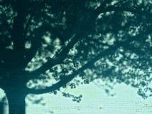 夏天结构树影子背景 免版税图库摄影