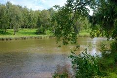 夏天绿河场面 免版税库存照片