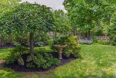夏天绿色庭院 免版税图库摄影