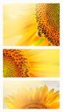 夏天网横幅或背景用向日葵 免版税库存图片