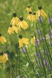 夏天美丽的黄色和紫色野花  免版税库存照片