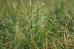 夏天背景的美丽的自然新鲜的绿草草甸 库存照片