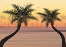夏天背景 与棕榈树和海鸥的日落 免版税库存照片