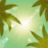 夏天背景 反对太阳的棕榈分支 葡萄酒设计 免版税库存照片