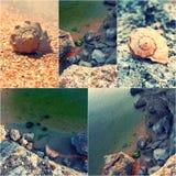 夏天自然和旅行概念例证的海滩图象拼贴画  多岩石的海滩和螺旋壳 被定调子的图象 免版税图库摄影