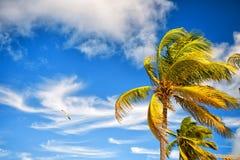 夏天自然场面 与蓝天的可可椰子树 免版税图库摄影