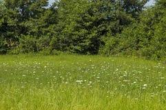 夏天自然美好的风景与沼地、芬芳开花野花和森林,中央巴尔干山, Stara Planina的 免版税库存图片