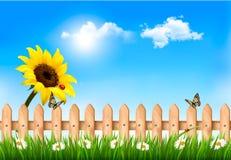 夏天自然背景用向日葵和木篱芭 免版税库存图片