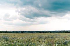 夏天自然草甸有野花背景 免版税库存图片