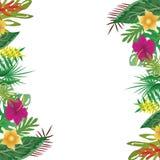 夏天花卉和叶子,有拷贝空间背景 免版税图库摄影
