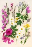 夏天花卉自然课 免版税库存照片