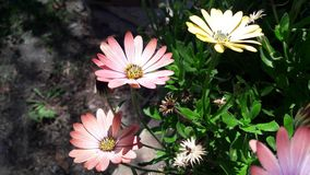 夏天花和美好的颜色 免版税库存照片