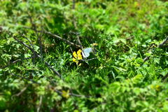 夏天花和蝴蝶 图库摄影