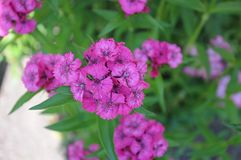 夏天花在庭院里 免版税库存照片