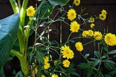 夏天花在庭院里 免版税图库摄影