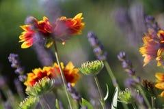 夏天花在庭院里 库存图片