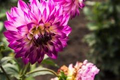 夏天花在庭院里 图库摄影