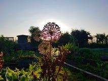 夏天花日落在爱尔兰庭院里 免版税图库摄影