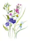 夏天花束,水彩剪影-响铃,福禄考,三叶草,雏菊, 免版税库存照片