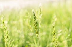 夏天草在阳光下 免版税库存图片