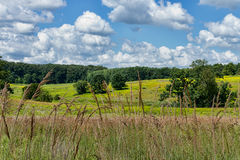夏天草甸和天空 免版税库存图片