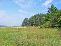 夏天草甸和森林 库存照片