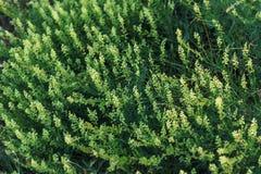 夏天草甸和野花顶上的景色 免版税库存图片