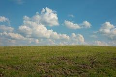 夏天草甸在蓝天下 免版税库存图片
