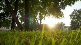 夏天草草甸宜人的风行动迷离与明亮的阳光,晴朗的春天背景的 股票录像