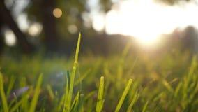 夏天草草甸宜人的风行动迷离与明亮的阳光,晴朗的春天背景的 图库摄影