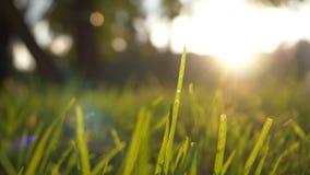 夏天草草甸宜人的风行动迷离与明亮的阳光,晴朗的春天背景的 库存照片