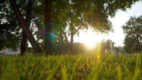夏天草草甸宜人的风行动迷离与明亮的阳光,晴朗的春天背景的 免版税库存照片