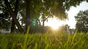 夏天草草甸宜人的风行动迷离与明亮的阳光,晴朗的春天背景的 免版税图库摄影