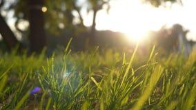 夏天草草甸宜人的风行动迷离与明亮的阳光,晴朗的春天背景的 免版税库存图片