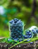 夏天莓果蓝莓在瓶子的水滴在草 免版税库存照片