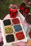 夏天莓果 库存图片