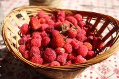 夏天莓果 免版税图库摄影