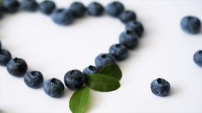 夏天蓝莓心脏在白色背景隔绝的框架戒毒所 爱莓果边界设计 顶视图或舱内甲板的关闭 影视素材