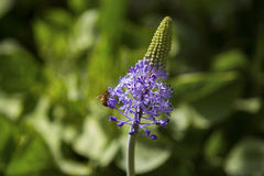 夏天蜂蜜工作 库存图片